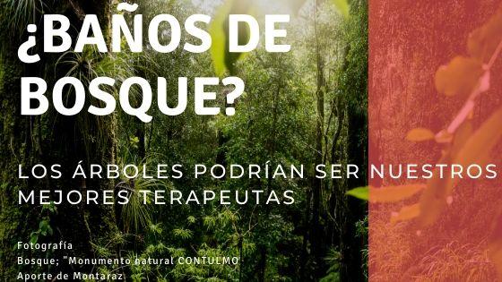 ¿Los Árboles del bosque podrían ser los mejores psicoterapeutas?